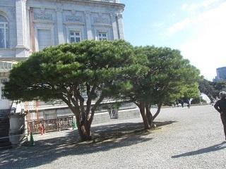 6・迎賓館庭木.JPG