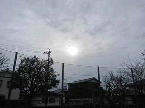 さくら・陽光.JPG
