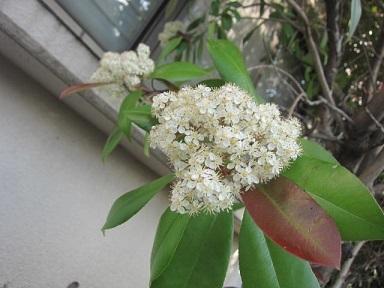 やすらぎ・白い花1.JPG