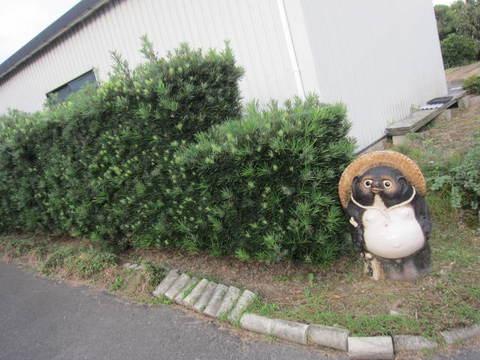 タヌキさん.JPG