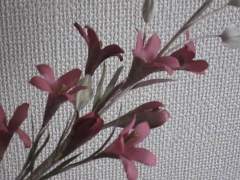 バラ色のラッパ.JPG