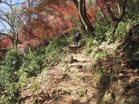 モミジ山・険しい道.JPG