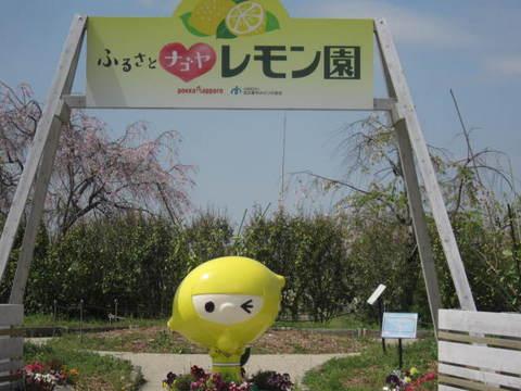 レモン園.JPG
