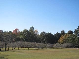 公園・枝垂れ1.JPG