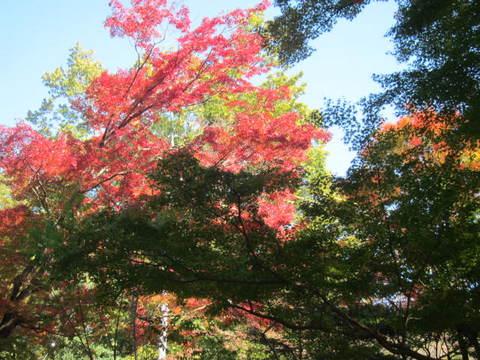 公園・紅葉.JPG