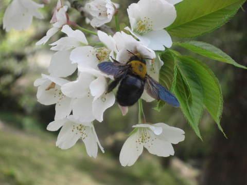 公園・蜂.JPG