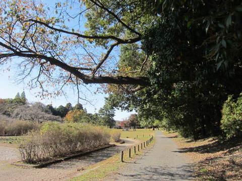 公園・道1.JPG