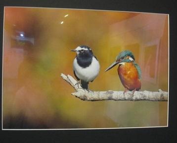 写真展・鳥.JPG
