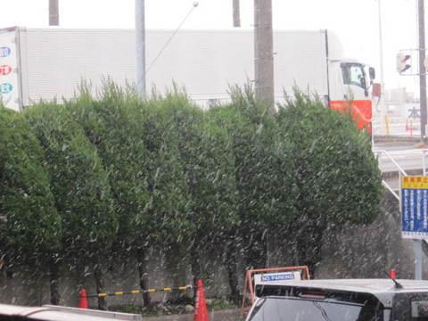 初雪・2.JPG