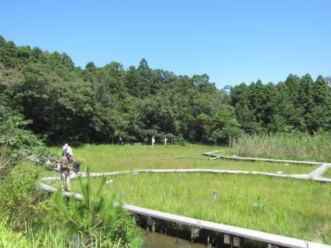 吉賀池・湿地.JPG