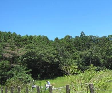 吉賀池・湿地3.JPG
