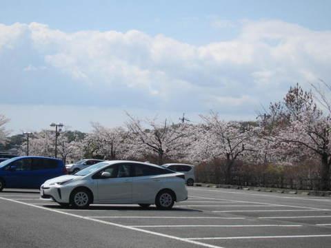 城山・さくら.JPG