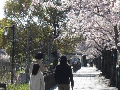 城山池・さくら.JPG