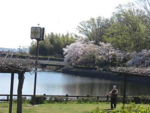 城山池・さくら3.JPG