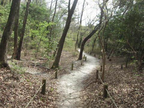 山辺の散歩道・2.JPG