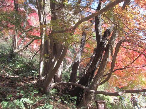 帰路・三位一体の樹.JPG