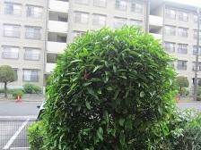 庭木・1.JPG
