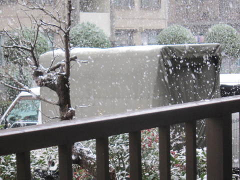 暮れの雪・1.JPG