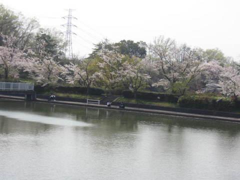 東谷山・池と桜2.JPG