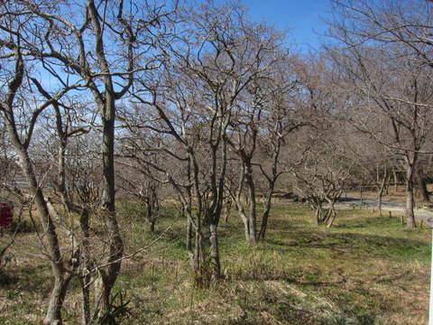 森林・クロミノ.JPG