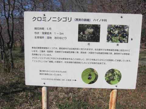森林・クロミノ標.JPG