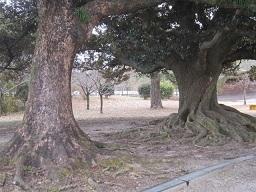 森林・大木2.JPG