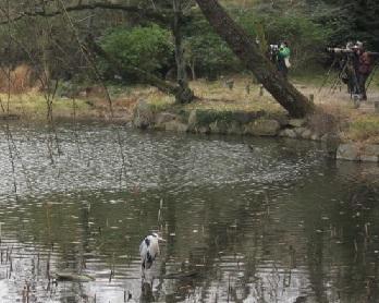 森林・池サギ3.JPG