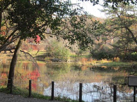 森林・池1.JPG
