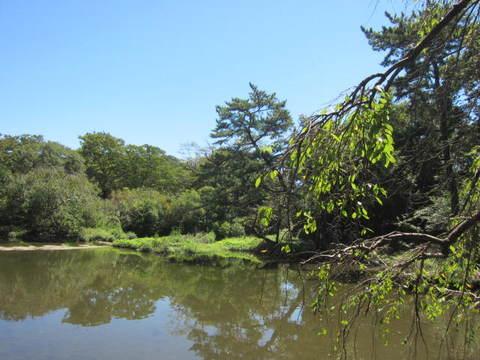 森林・池2.JPG