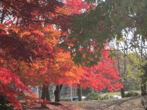 森林・紅葉1.JPG