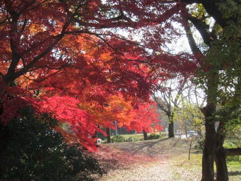 森林・紅葉2.JPG