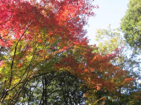 森林・紅葉4.JPG