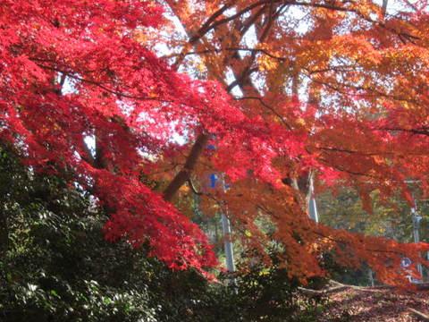森林・紅葉5.JPG