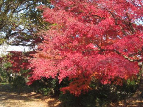 森林・紅葉6.JPG