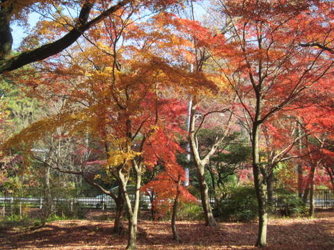 森林・紅葉7.JPG