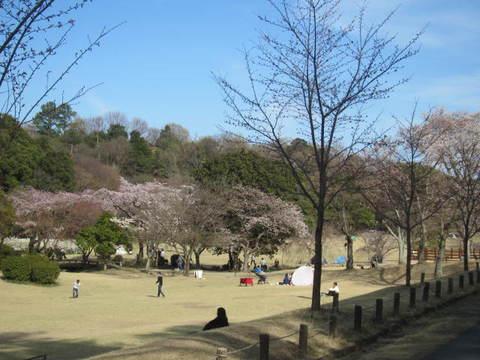 森林公園・さくら.JPG