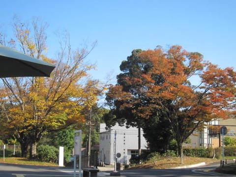 森林公園・3.JPG