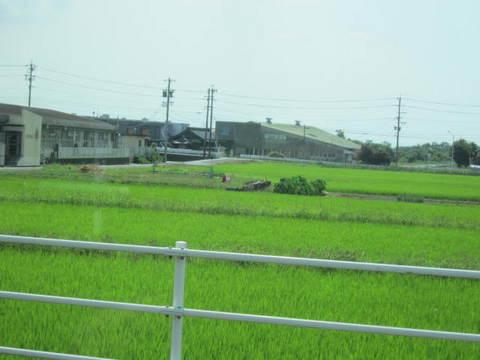 水田・1.JPG