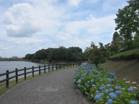 池畔・3.JPG