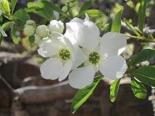 白い花・1.JPG