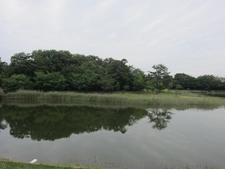 維摩池・1.JPG