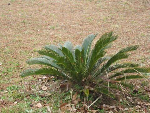維摩池植物・1.JPG