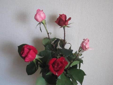 薔薇の切り花・2.JPG