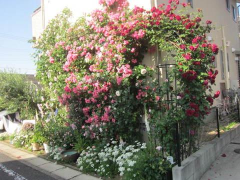 薔薇の家.JPG