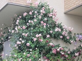 薔薇の館.JPG
