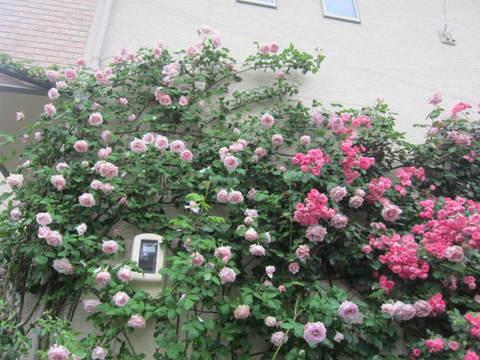 薔薇の館・1.JPG