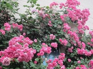 薔薇の館・3.JPG