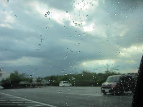 雨上がり.JPG