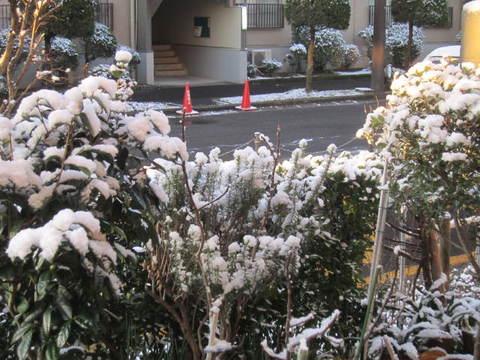 雪・1.JPG