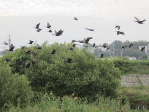 鳥・3.JPG